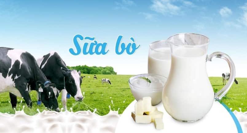 Sữa bò tăng chiều cao cho người trưởng thành trên 18 tuổi