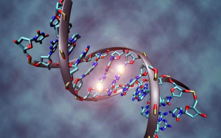 Yếu tố di truyền ảnh hưởng đến việc tăng kích thước vòng 1