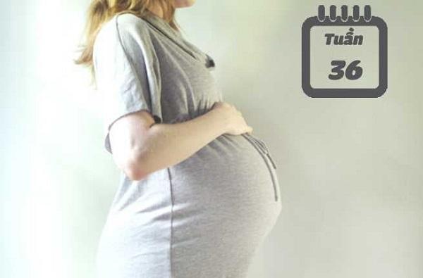 Thai 36 tuần tuổi nặng bao nhiêu kg và những điều mẹ cần biết